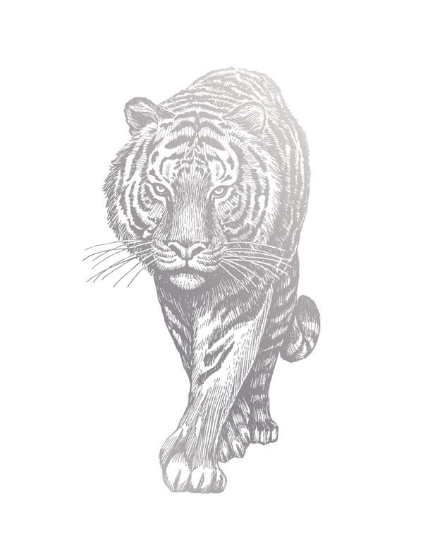 长白山已知国家重点保护动物 58 种,东北虎是国家一级保护动物